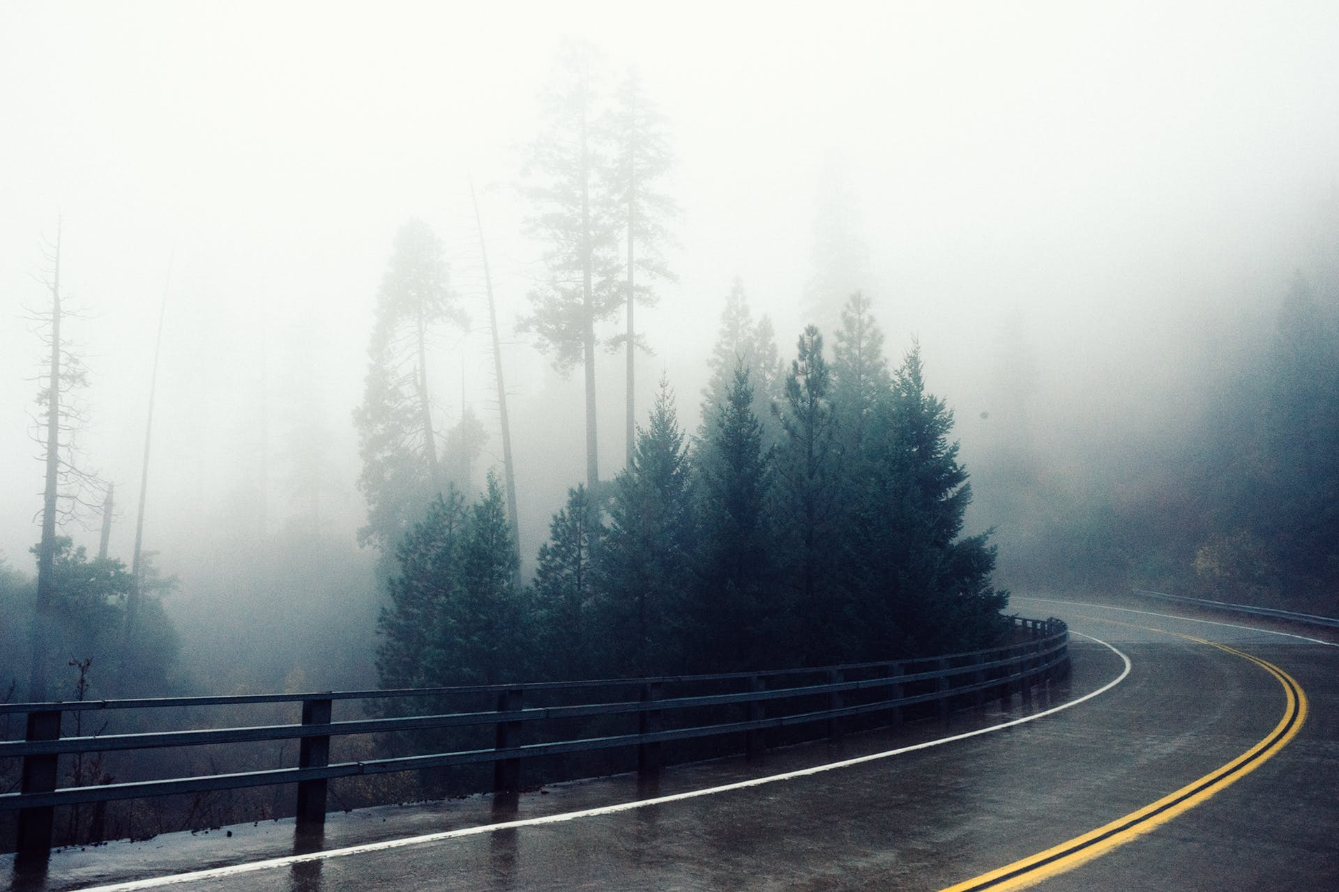 Free stock photo of road, fog, bend, foggy