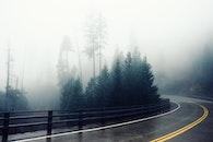 road, fog, bend