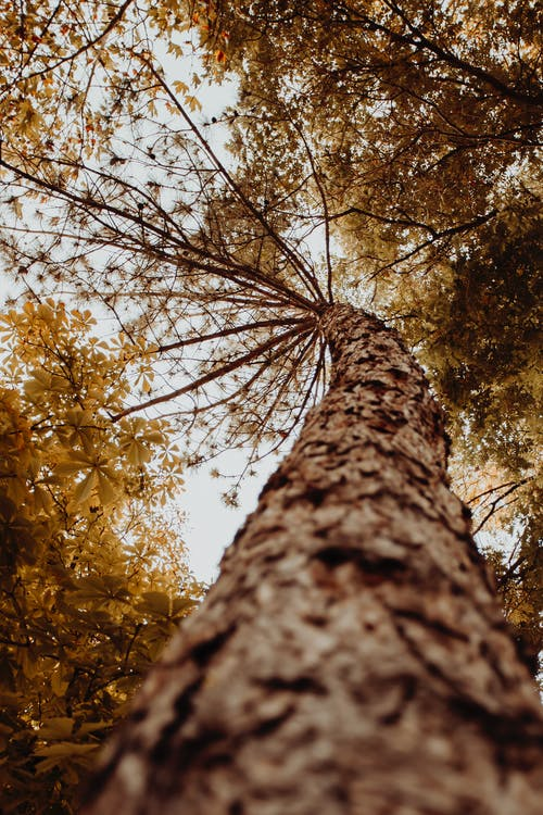 Low Angle Photography of Brown Trees