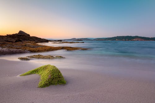 Green Moss on Brown Sand Near Body of Water