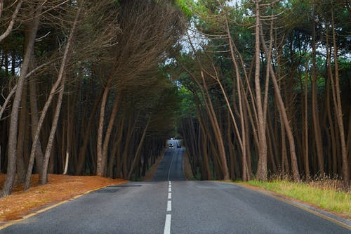 Free stock photo of #viaje, Atardecer, borde del camino, camino