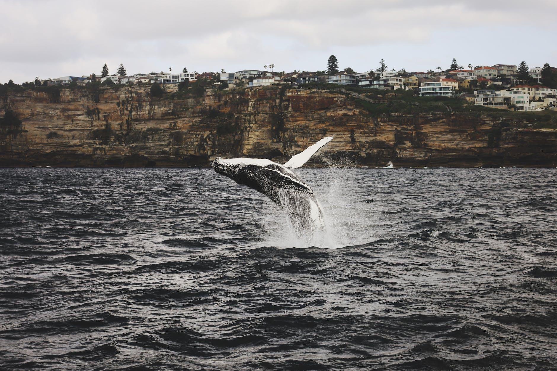 dolphin swimming in seas