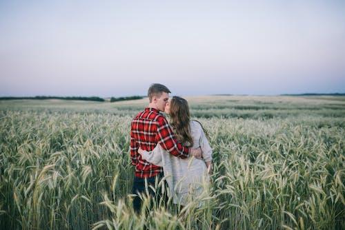 alan, arazi, aşık, bitki içeren Ücretsiz stok fotoğraf