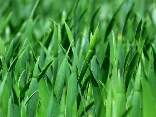 คลังภาพถ่ายฟรี ของ ต้นไม้, พืช, สีเขียว