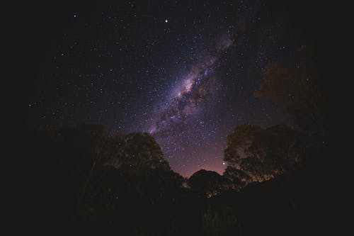 From below scenic view of glowing stars in dark sky above growing trees