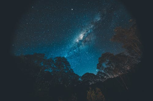 Bright starry sky above trees at night