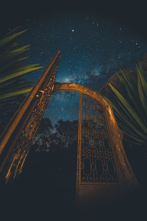 Golden gate between plants under night sky with glowing stars