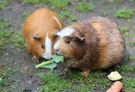 eating, pet, cute
