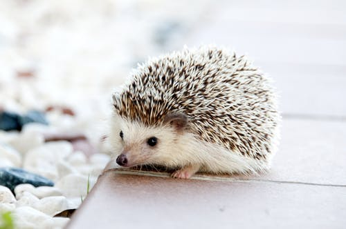 Shallow Photo of Hedgehog