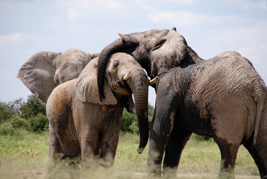 Африка, дика природа, Савана