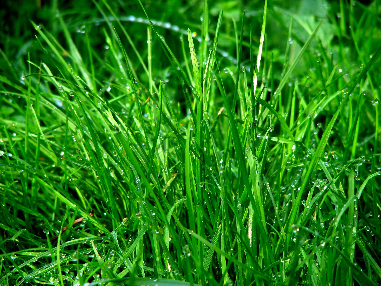 Kostenloses Stock Foto zu boden, gras, grün, nass