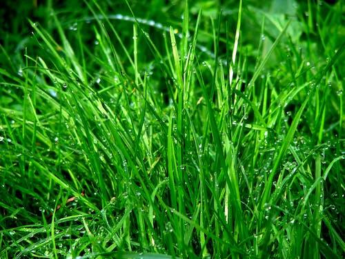Photos gratuites de centrale, herbe, humide, moulu