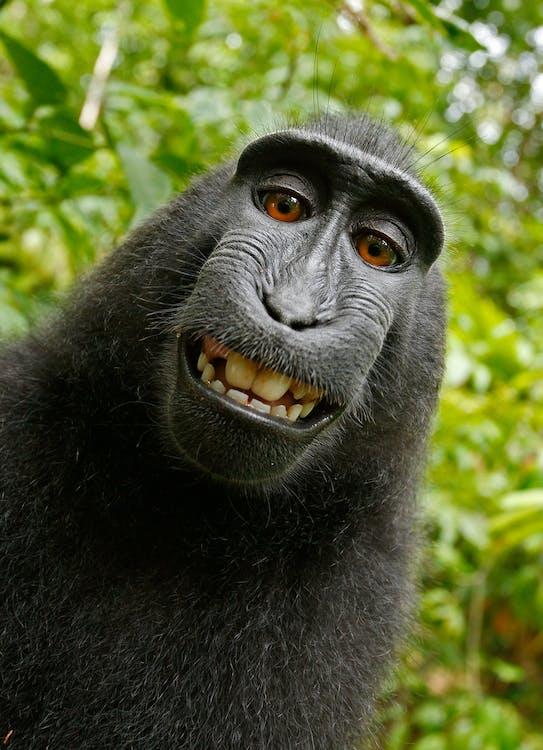 buồn cười, con khỉ, con vật