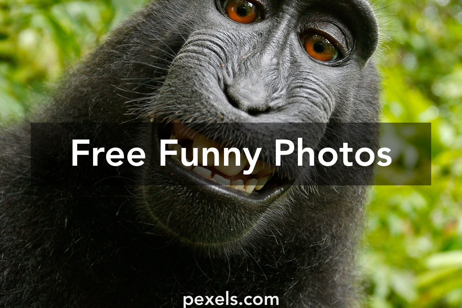 250 amazing funny photos pexels free stock photos