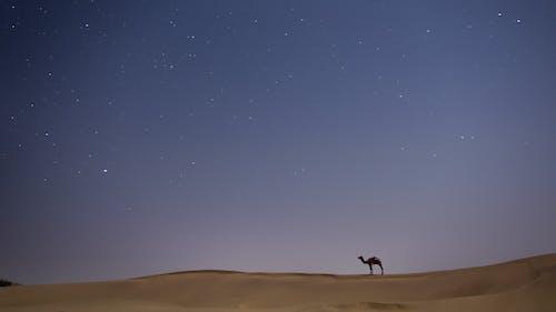 Безкоштовне стокове фото на тему «верблюд, вечір, віддалений»