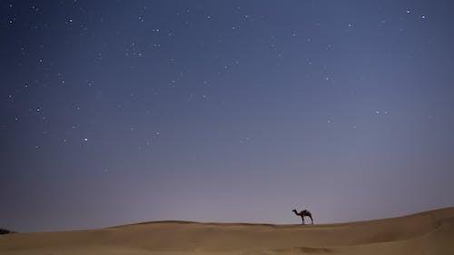 Foto stok gratis alam semesta, artis, bayangan hitam