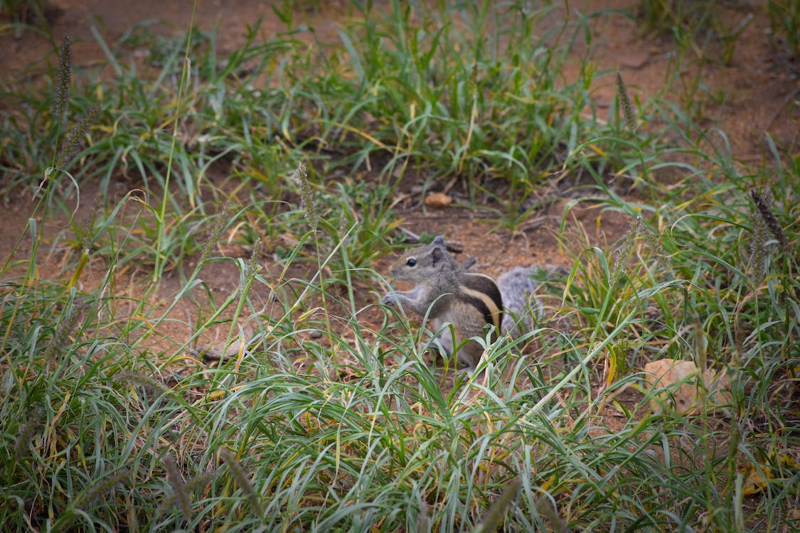 Free stock photo of grass, nature, squirrel