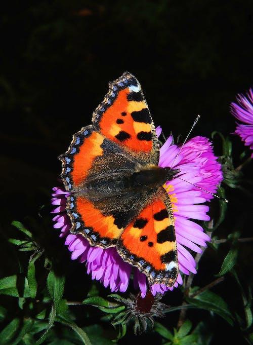 Foto d'estoc gratuïta de ales, colorit, flor, florir