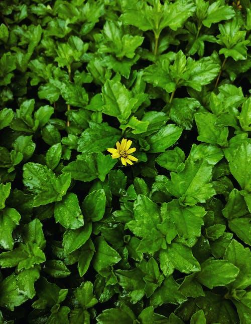 Free stock photo of india, leaf, plant