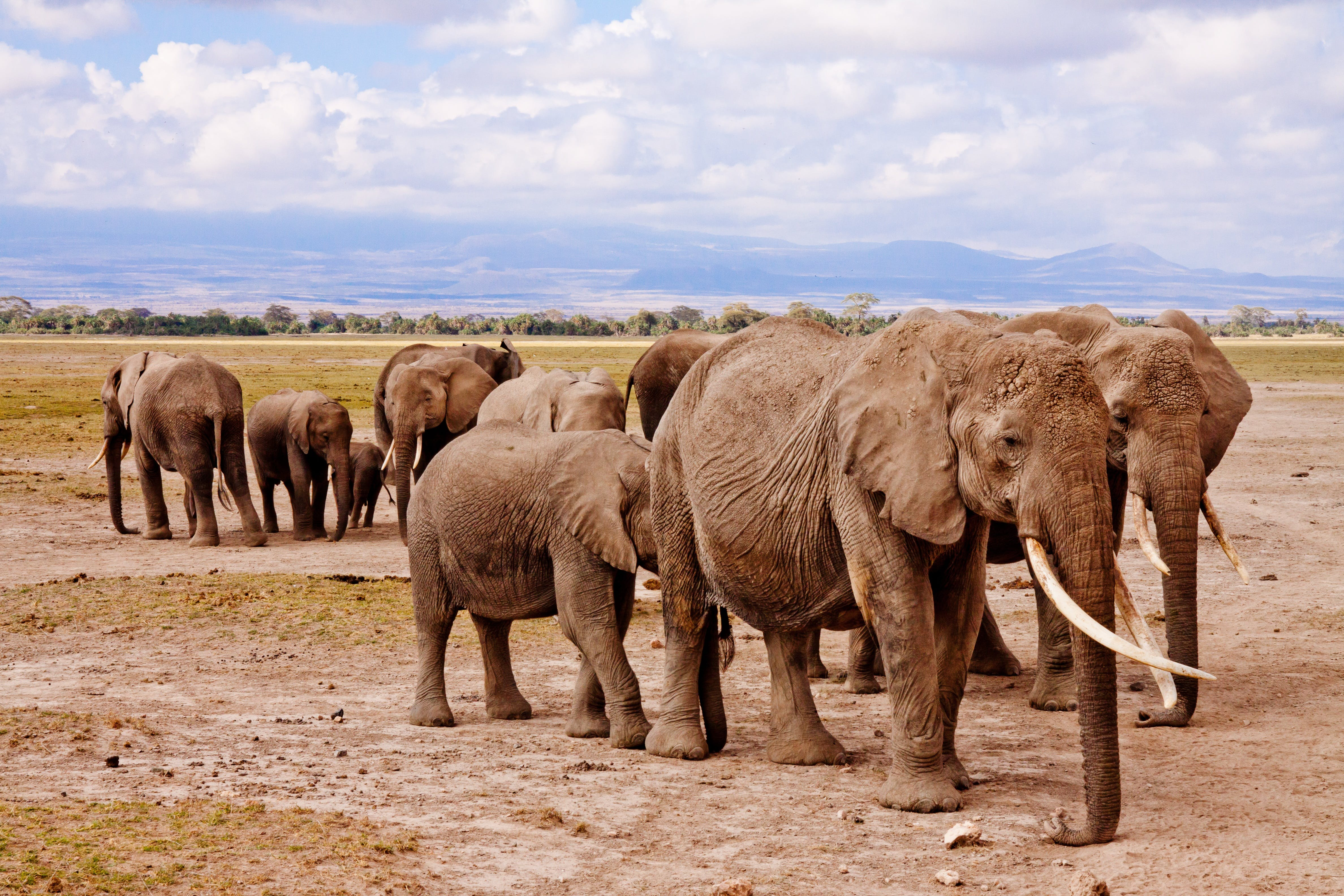 Group of Elephants on Walking on Brown Road during Daytime
