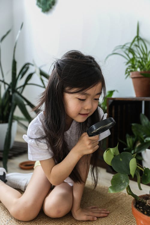 Adorable little Asian girl examining potted plant