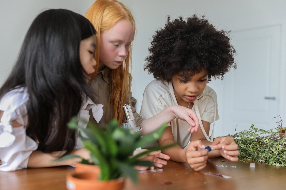 Concentrated multiracial children discussing while watching samples in microscope in room with plants