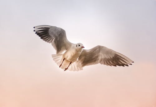 White Bird Flying in the Sky