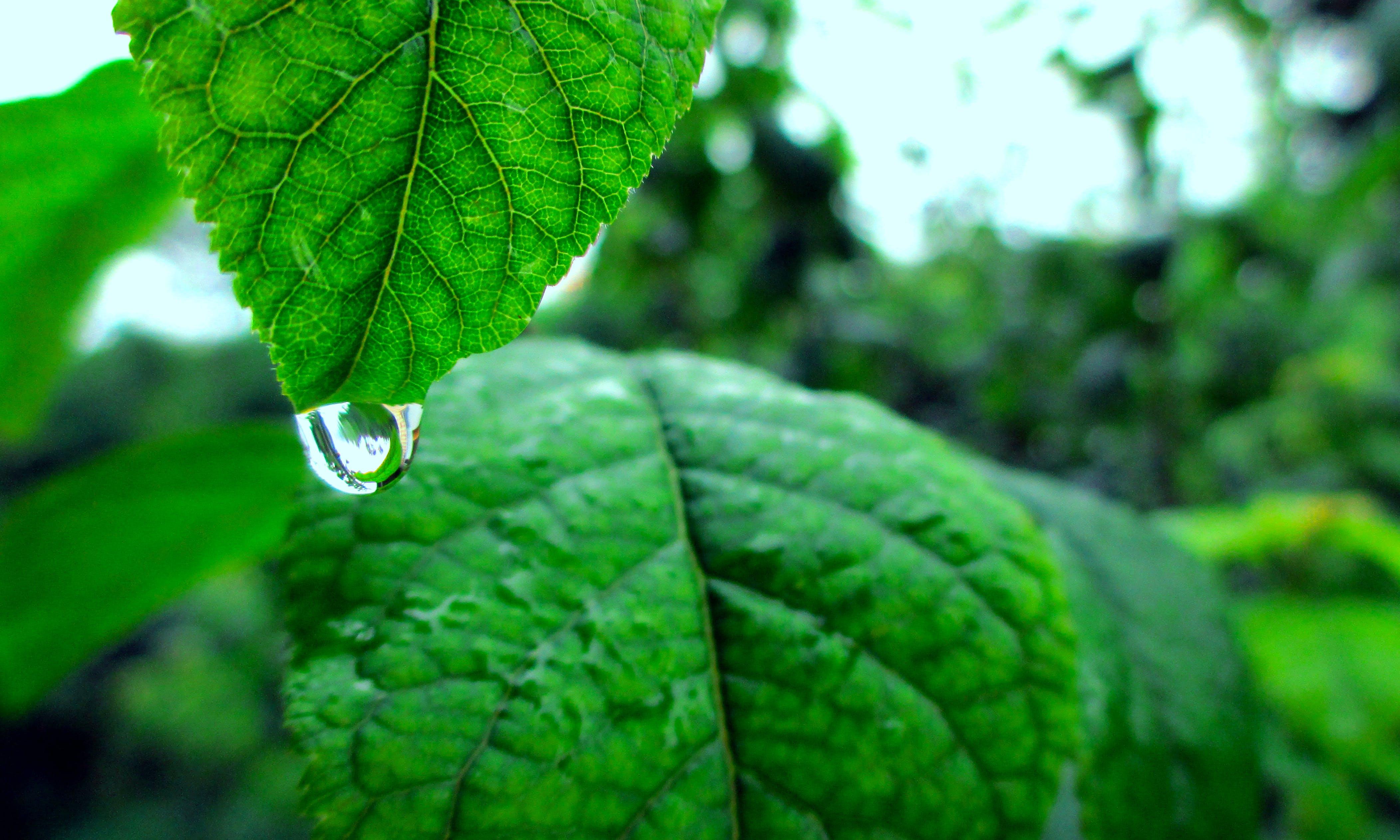 closeup, drop of water, green