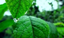 nature, leaves, rain