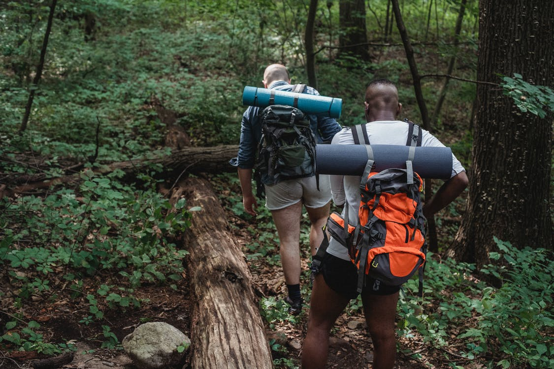 Full body back view of anonymous multiethnic adventurers in casual clothing with backpacks walking on ground covered with grass in woodland in daylight