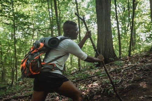 Randonneur Mâle Randonnée Le Long De La Pente De La Forêt Avec Bâton