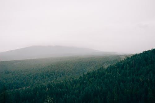 Бесплатное стоковое фото с лес, с воздуха