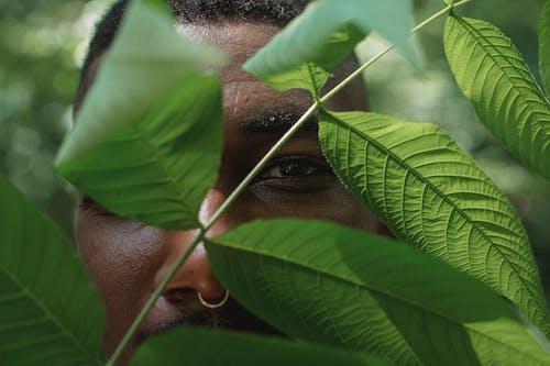 Crop Homme Noir Debout Derrière Les Feuilles Des Plantes Vertes Dans La Forêt