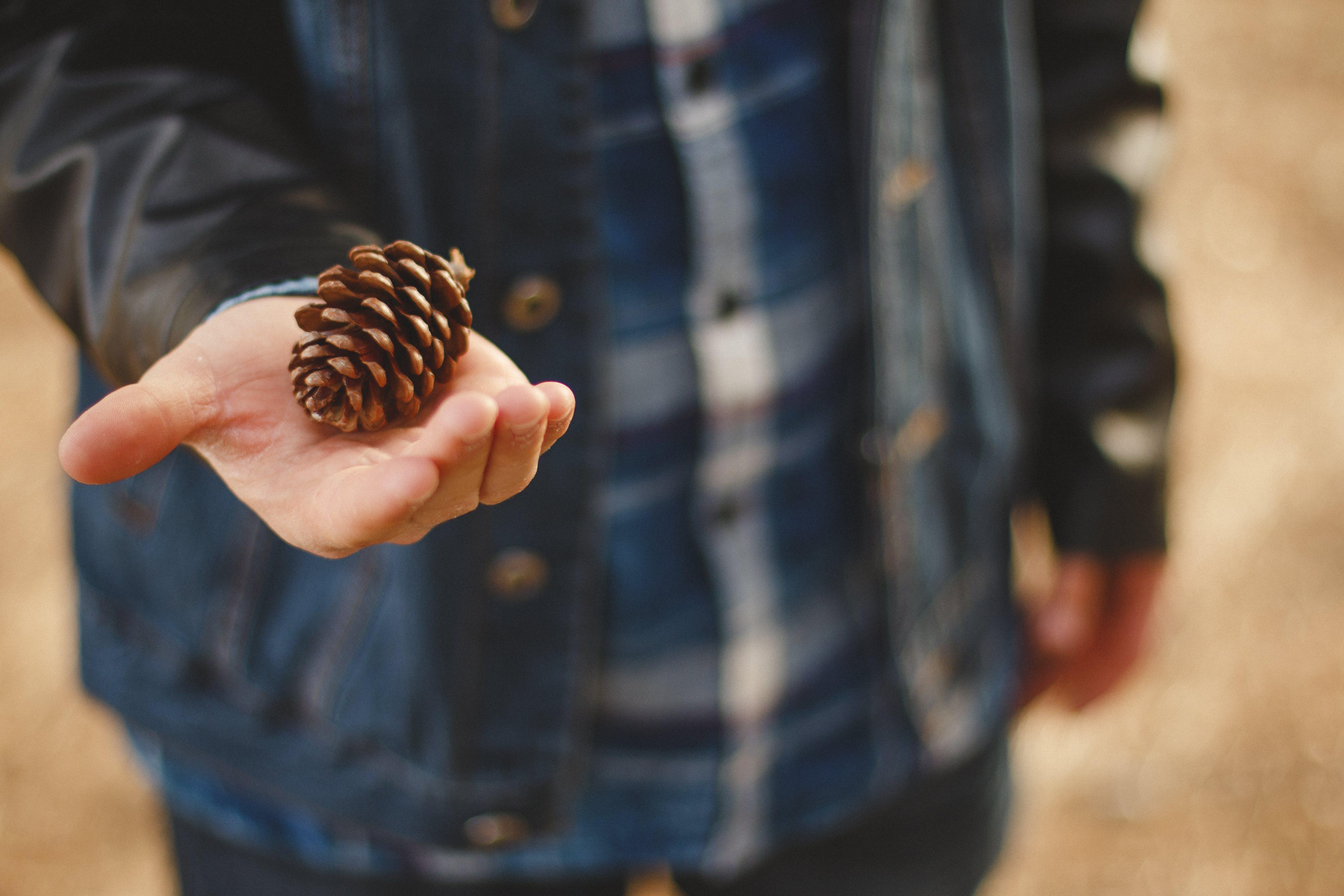 bokeh, hand, nature