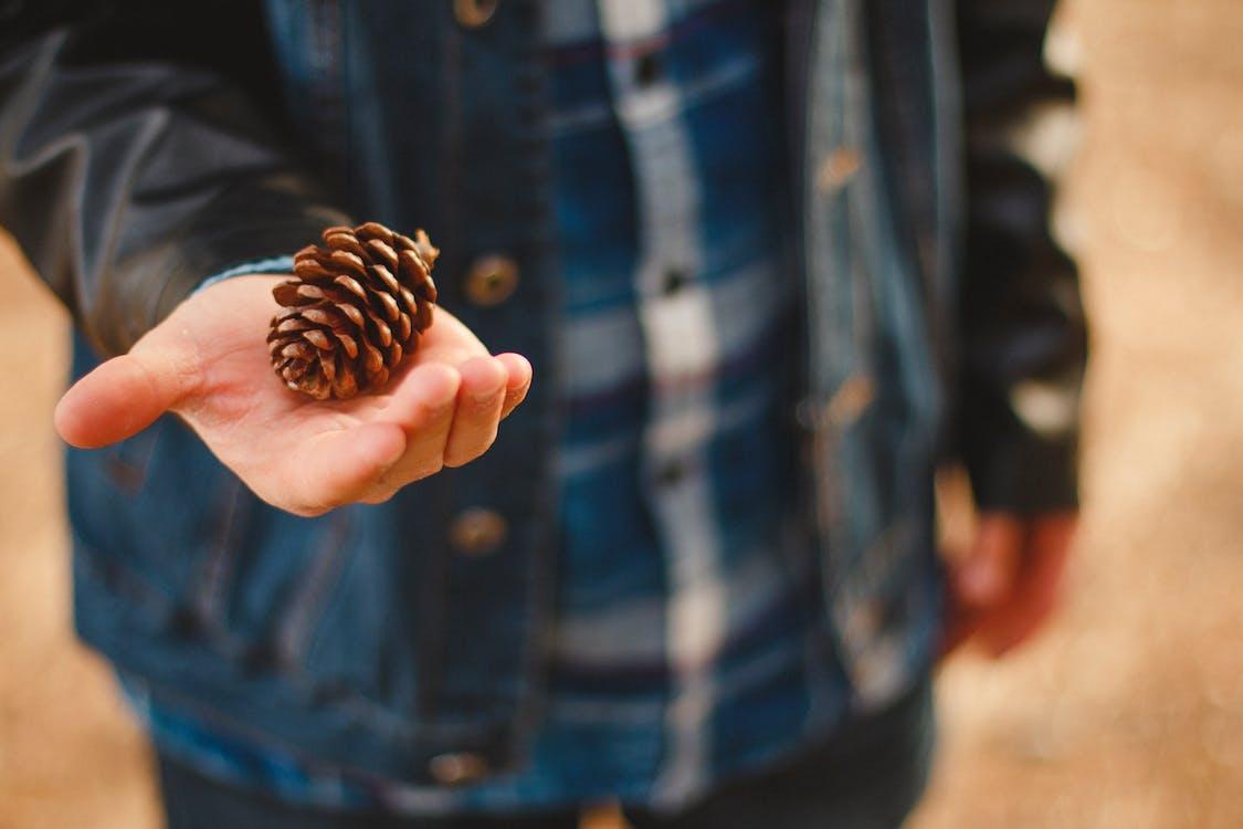 borová šiška, příroda, ruka