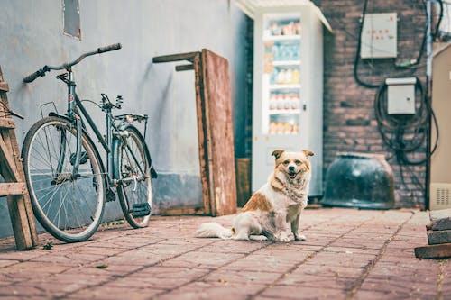 Kostenloses Stock Foto zu bürgersteig, draußen, fahrrad, familie
