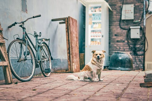 Fotos de stock gratuitas de abandonado, al aire libre, bici, calle