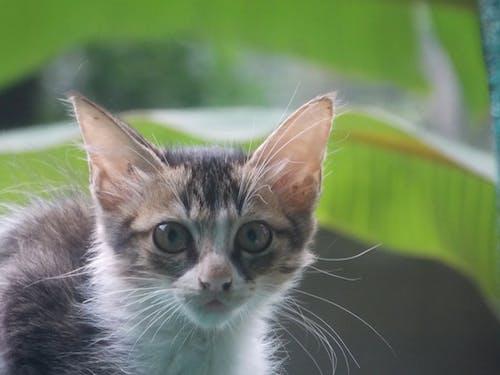 Fotos de stock gratuitas de coquetón, fondo de pantalla HD, fondos de pantalla, gatito