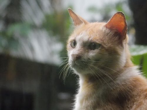 Fotos de stock gratuitas de animal, atención, gato, gato pensante