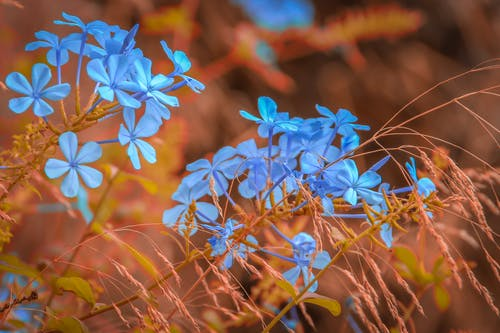 Free stock photo of blau, blumen, blüten