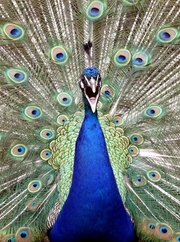 Free stock photo of nature, bird, animal, beautiful