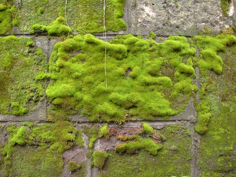 Free stock photo of texture, wall, moss, green