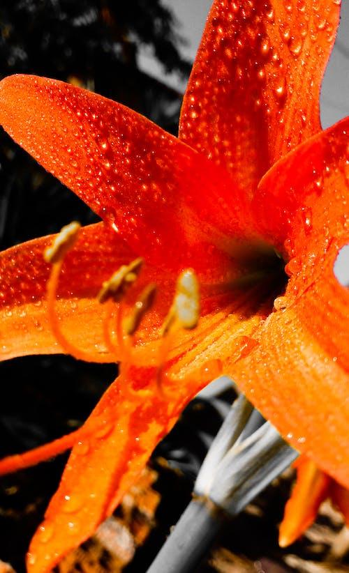 Gratis lagerfoto af #flor, #flores