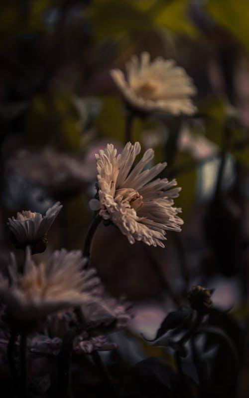 Free stock photo of beautiful flower, Beautiful sunset, bright colours, dark