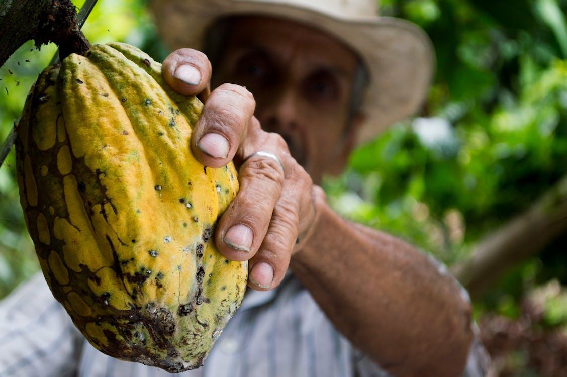 Republik Dominika merupakan salah satu penghasil coklat terbesar di dunia