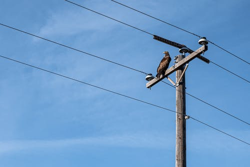 Bird sitting on utility pole under blue sky