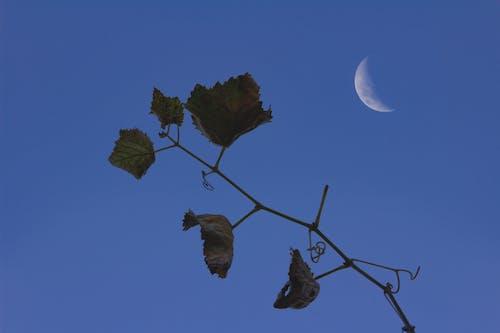 folhas, folhas de árvore, 루아, 세 아 줄의 무료 스톡 사진