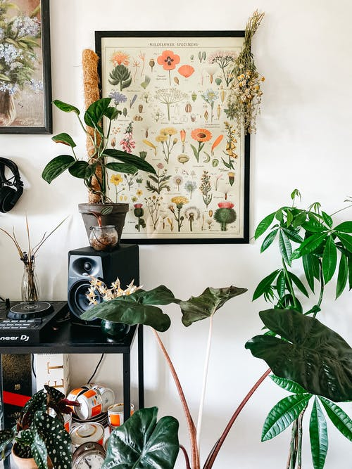 Collection of exotic potted houseplants placed near shelf and wall with picture of various flowers at home of gardener