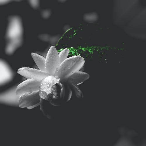 Selective Color Photography Oflower