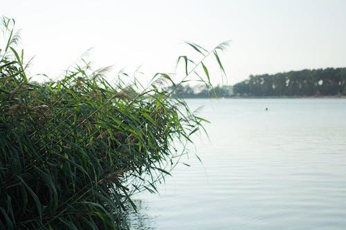 Fotos de stock gratuitas de agua, lago, lhota
